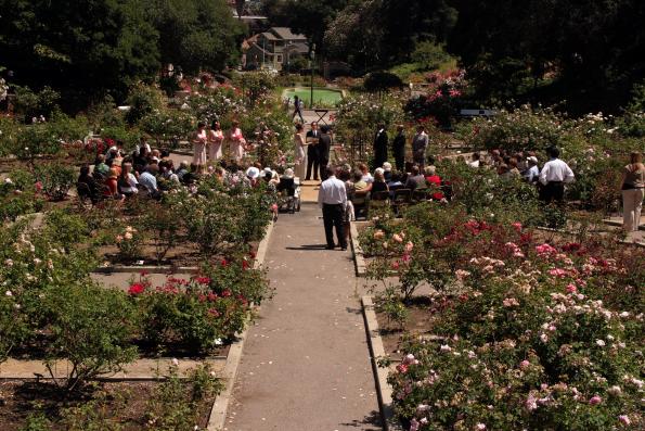 wedding photos oakland and piedmont rose garden san