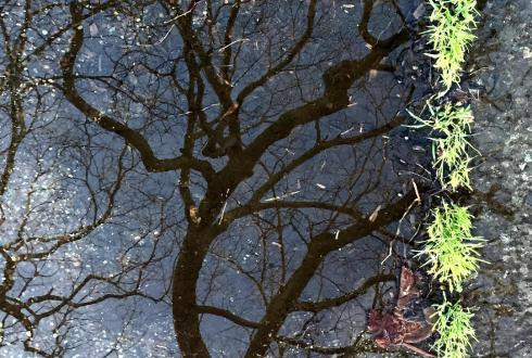 The intersection of street, nature and at. #art #abstract #reflection #intersection #nature #street
